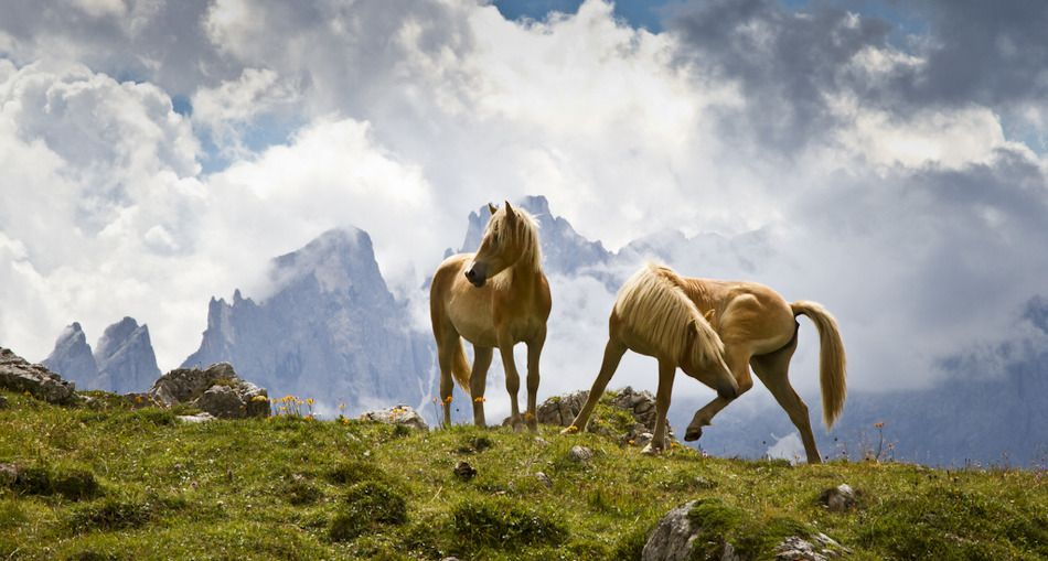 Dolomite Horses by Kevin Grace